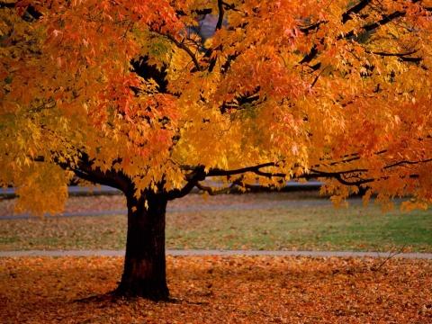 ruduo-tai-metas-kai-kiekviena-diena-galima-stebeti-kaip-keiciasi-gamta