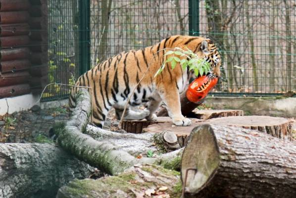 zoologijos-sode-svente-moliugu-ir-gyvunu-myletojams