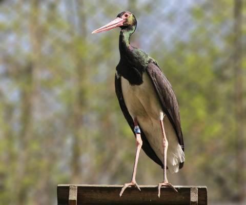 40-pauksciu-diena-pazinkime-sparnuocius-lietuvos-zoologijos-sode