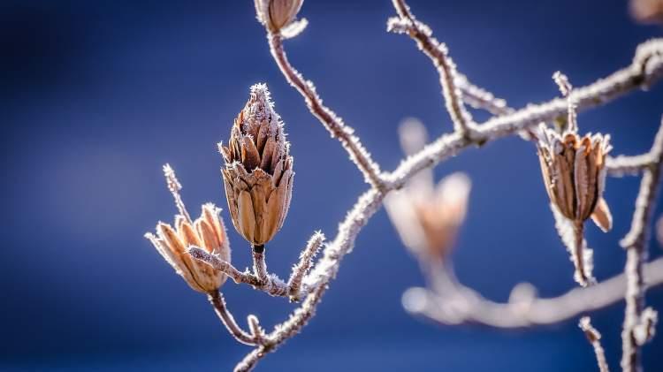 vdu-botanikos-sodas-kviecia-kauniecius-pasitikti-vidurziemi