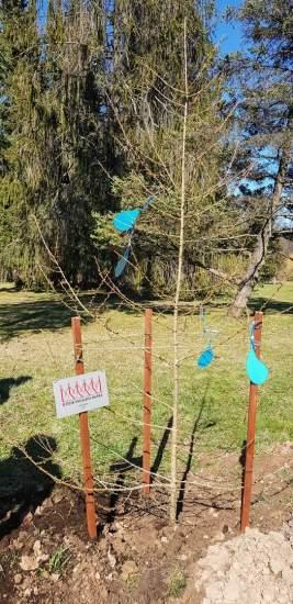 https://www.kaunieciams.lt/wp-content/uploads/2019/04/kauno-botanikos-soda-papuose-supratimo-medis.jpg