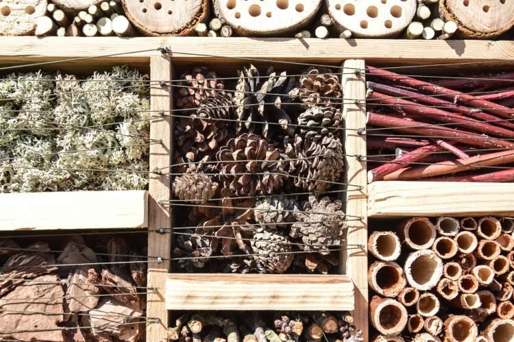 https://www.kaunieciams.lt/wp-content/uploads/2019/05/kauno-botanikos-sodo-gyventojams-nauji-vabzdziu-viesbuciai.jpg